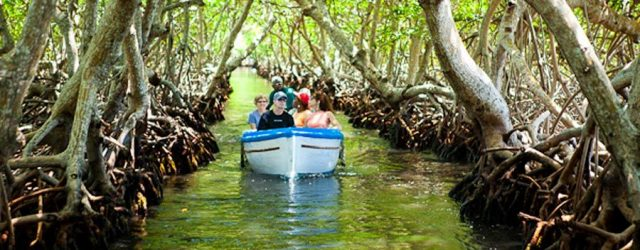 Garifuna Mangrove tour