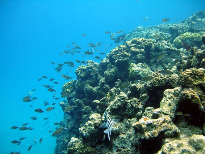 grand cayman snorkeling
