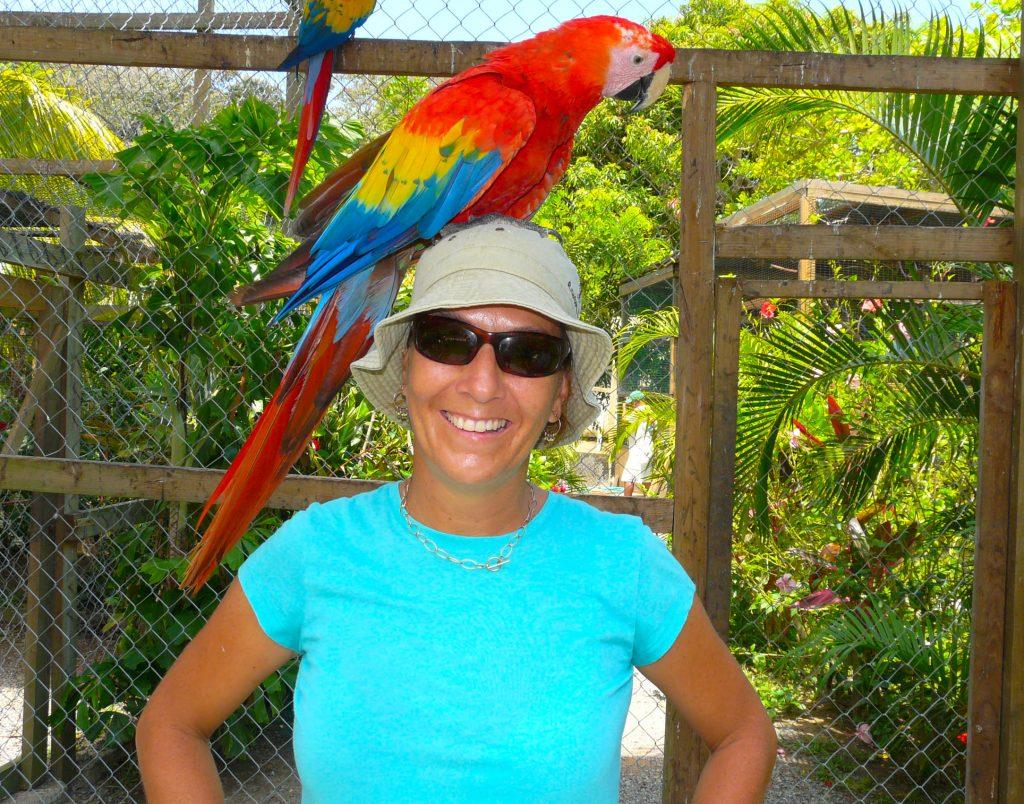 Roatan Parrots wild on