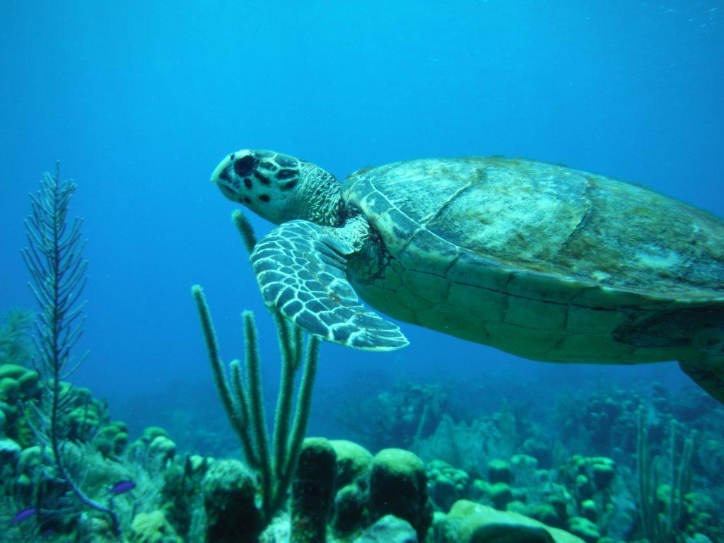 Roatan Discover Diving